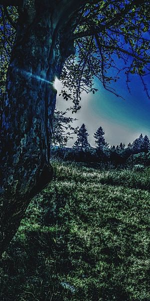 Tree Beauty In Nature Green Color Nature Outdoors Scenics Grass Landscape Day Sky Light Effect Shine Bright The Week On EyeEm Lost In The Landscape Sunlight Obscured Light Beam Shadow Nature Field Sun Tree Apple Tree Beautiful Dramatic Sky Backgrounds