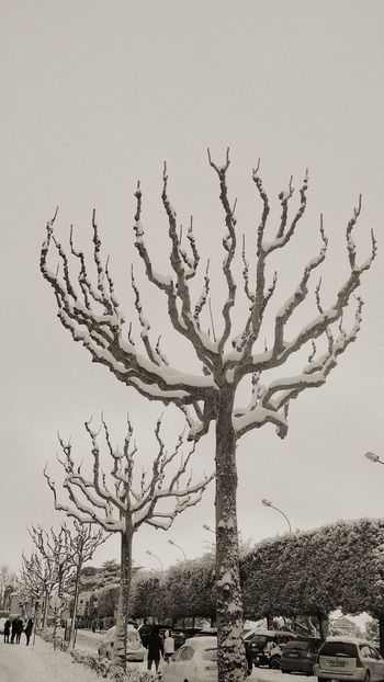 """Let it snow on Rome"" Rome Blackandwhite B&w Monochrome Tree Trees Snow Snow ❄ Snowing Streetphotography Street Street Photography Streetphoto_bw Colour Your Horizn Tree Tree Trunk Nature Outdoors Day Branch Bare Tree Sky Landscape EyeEmNewHere"