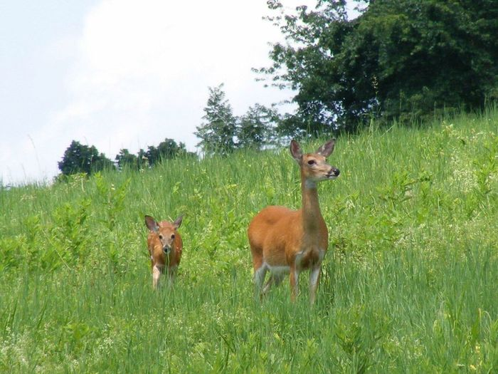 I took this Pic many years ago.. Mammal Animal Themes Grass Field Young Animal Domestic Animals Nature Green Color Growth No People Landscape Day Tree Outdoors Animals In The Wild Beauty In Nature Scenics