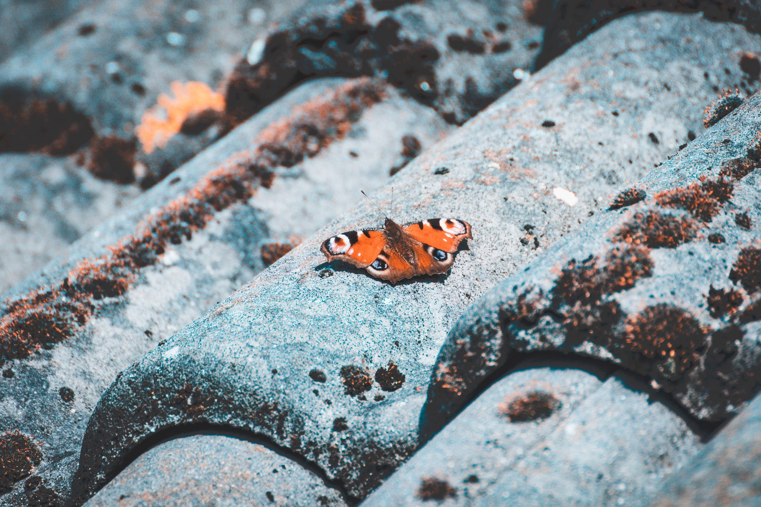 animals in the wild, one animal, animal, animal themes, animal wildlife, insect, invertebrate, selective focus, no people, ladybug, close-up, day, rock, high angle view, orange color, beetle, nature, solid, spotted, rock - object, outdoors