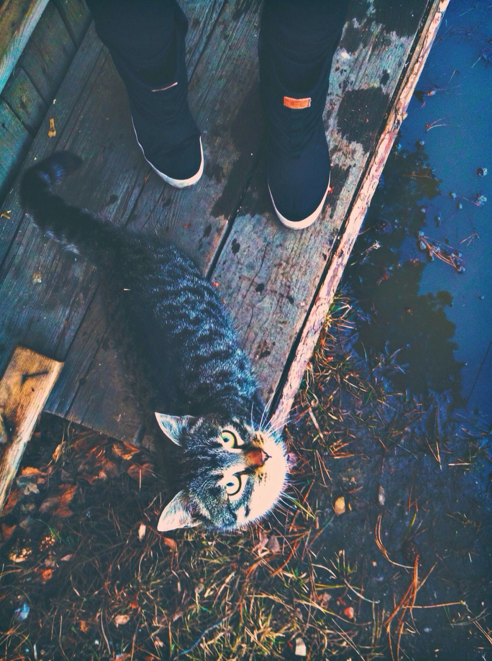 animal themes, high angle view, one animal, low section, domestic animals, shoe, pets, person, street, mammal, outdoors, standing, day, dog, footwear, domestic cat, sunlight, sidewalk