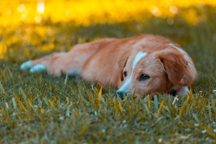 Dog lying down on land
