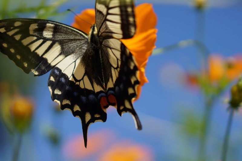 Butterfly Insect Animal Wing Animal Wildlife Animals In The Wild Nature Flower Butterfly - Insect Fragility Beauty In Nature Plant Close-up