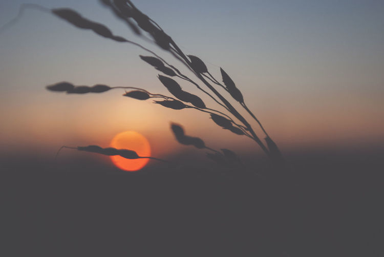 Sky Sunset Beauty In Nature Nature Tranquility Silhouette Scenics - Nature Sun Growth Orange Color No People Tranquil Scene Plant Outdoors Copy Space Sunlight Environment Idyllic Land Non-urban Scene