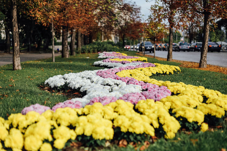 Plant Flower Flowering Plant Tree Park Park - Man Made Space Nature Selective Focus Yellow Day Growth Incidental People Beauty In Nature Close-up Fragility Vulnerability  Focus On Foreground Change Multi Colored Freshness Outdoors City City Lights Car Lights Autumn