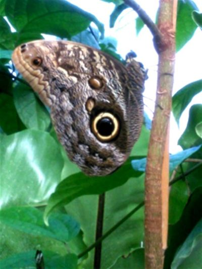 Easter Ready Moth Londonzoo Butterfly Enclosure Beautiful Plants Jewel Stunning Branch