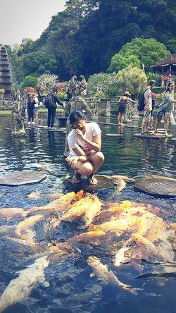 Beautyful fish 🐠🐠🐠 Temple Fish #Indonesia Dewataisland Bali, Indonesia Water Men Women Rocky Mountains Hot Spring Flamingo Growing Countryside Animal Neck Freshwater Bird