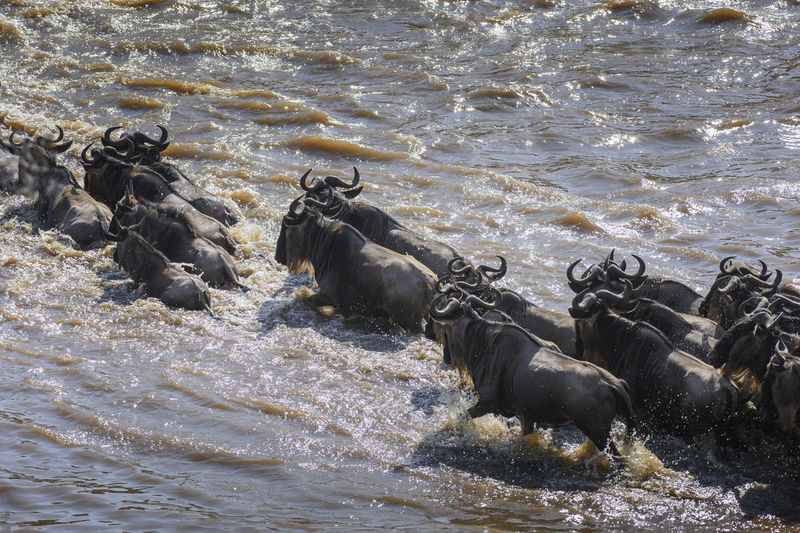 View of horse in river