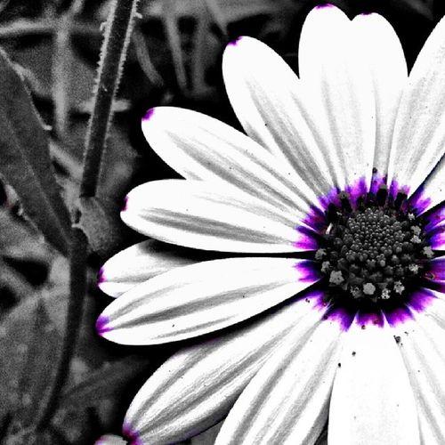 Bona Tarda!!! Gfd_flowerpic Gf_daily Gf_spain Global_family