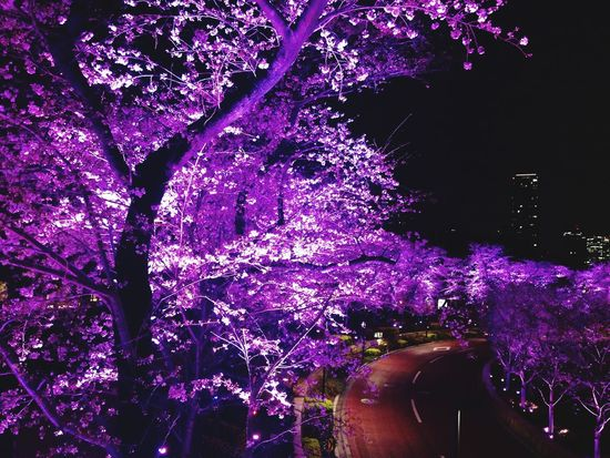 I took this picture in april. One of my Favorite pictures. Cherry Blossoms Sakura Tokyo Japan Roppongi Night