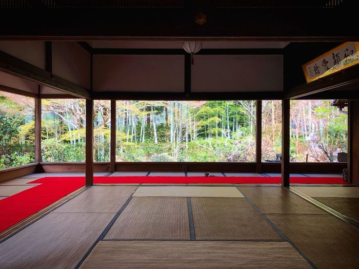 宝泉院 大原 Kyoto,japan Travel Destinations Tranquility Tranquil Scene Japan Photography Architecture Indoors  Built Structure Tree Plant Day No People Empty Window Growth Architectural Column Absence