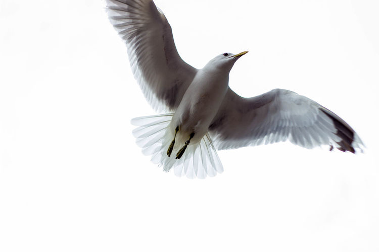 Seagull flying over Above Animals In The Wild Bird Day Flying Low Angle View No People Outdoors Seagull Spread Wings