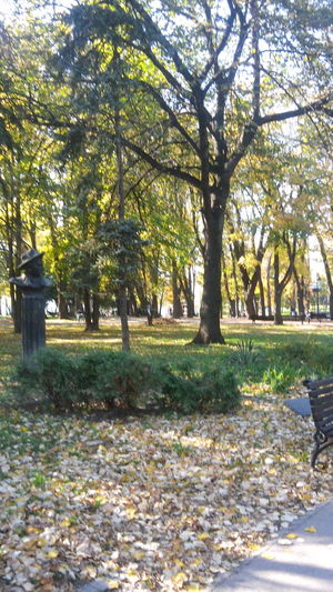 Fallen Leaves Afternoon Afternoon Light Autumn Autumn Autumn Colors Autumn In Belgrade Autumn Leaves Beauty In Nature Branch Day Empty Park Grass Growth Kalemegdan  Landscape Leaf Nature No People Outdoors Park Sunlight Tree Tree Trunk Trees, Monument And Leaves