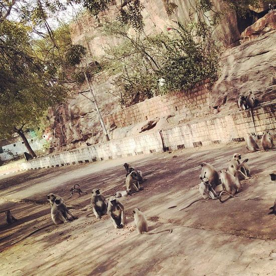 Monkeys Mandore Outings  Random_capture This_view_is_astonishing 😍 Ps:- Kajal is the little one running behind 😂😂