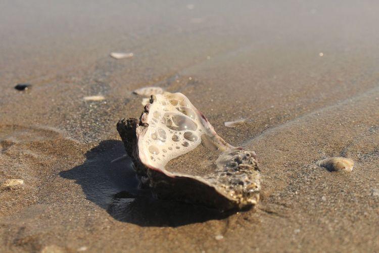Sand Beauty In