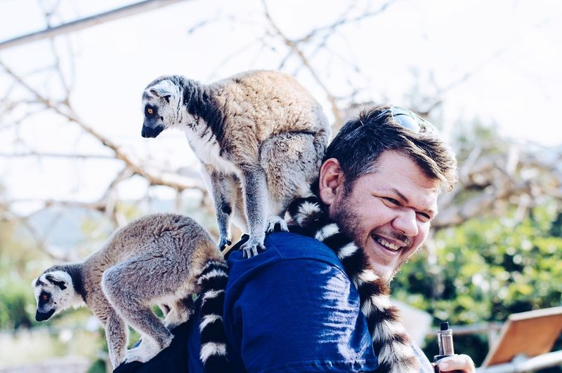 Side view portrait of cheerful man with lemurs at zoo