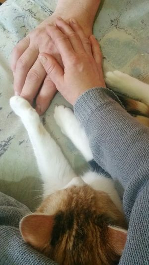 Our Cat Human Body Part High Angle View Indoors  One Person People Adult Human Hand