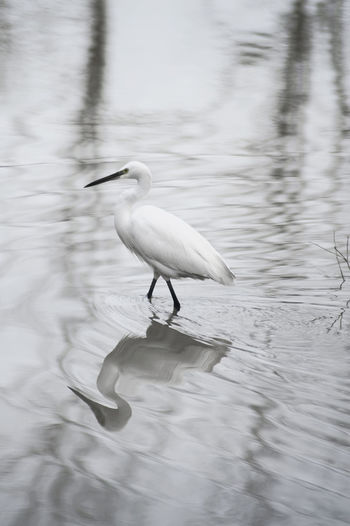 Animal Themes Animal Wildlife Animals In The Wild Bird Crane Day Great Egret Lake Nature No People One Animal Outdoors Perching Water Waterfront
