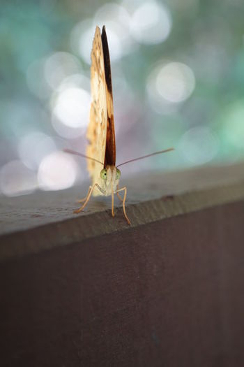 Close-up of insect on railing