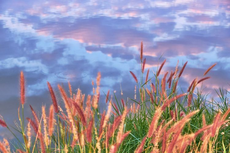 Grass Beauty In Nature Close-up Cloud - Sky Day Fountain Grass Growth Lake Nature No People Outdoors Plant Reflections In The Water Scenics Sky Tranquil Scene Tranquility
