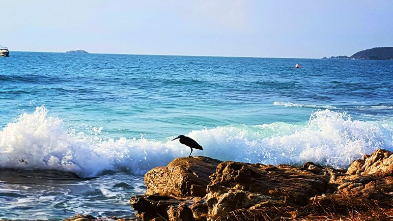 Sea Wave Water Horizon Over Water One Animal Beauty In Nature Beach Nature Animal Wildlife Bird Animals In The Wild Animal Themes Outdoors Motion Day Adventure No People Sky Pelican Mammal