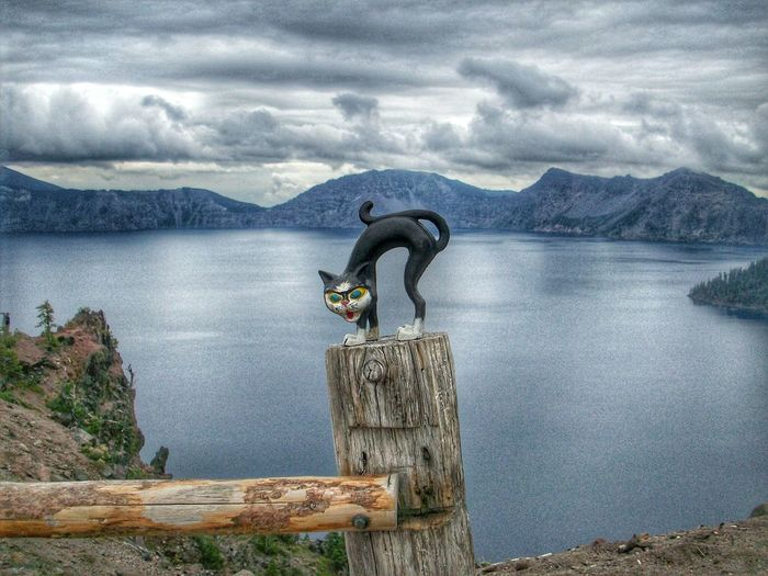 This is my hiking friend, Murphy! He is the cat's meow! Ask anyone! Oregon Oregon Beauty Oregonia Lakeside Lake View Lake Lakescape Nature Sky And Clouds Crater Lake National Park Oregonexplored Cat♡ Catoftheday Cat Lovers Catlady Catsofeyeem Cat Crater Lake Craterlake