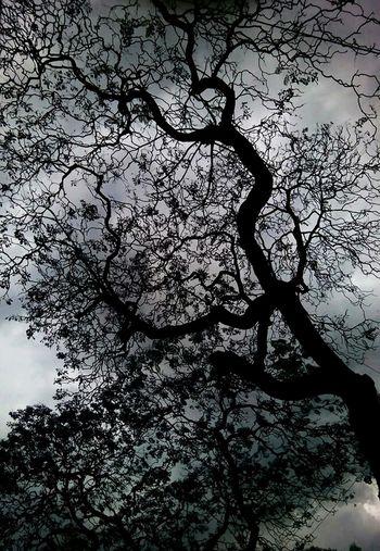 Tree Sky Silhouette Scenics Nature árbol Oscuro Outdoors Dark