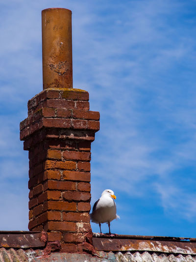 Close-up of seagull perching on shore against sky