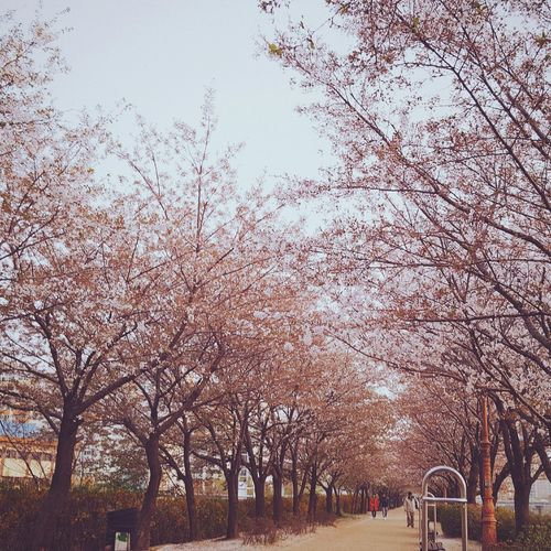 Cherry Blossom See You Next Year! 😍😌😊