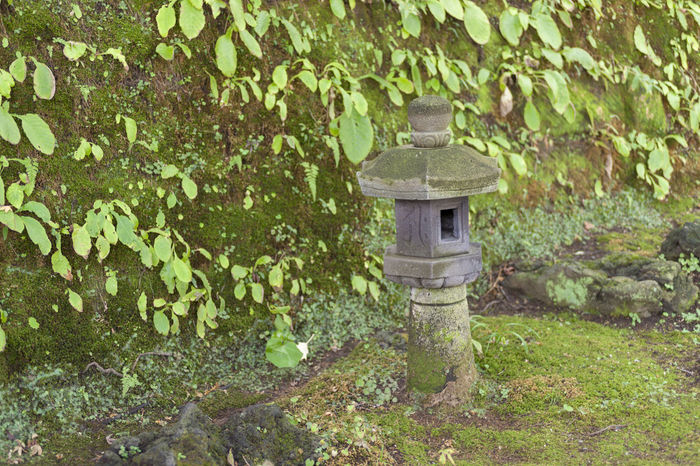 Japanese Garden Temple Of Japan Architecture Beauty In Nature Building Exterior Built Structure Day Green Color Growth Ivy Leaf Moss Nature No People Outdoors Plant Plant Part Solid Stone Wall Tree Wall Wall - Building Feature α900