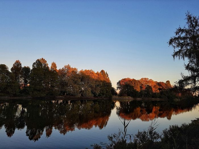 Nature_collection Beauty In Nature Nature Park Tree Water Lake Autumn Reflection Dawn Blue Sky
