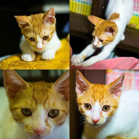 고양이 도비 이모네 사진 나랑잘놀아줌 일상 Nikond610 니콘D610 Photographer_suhyeon Cat