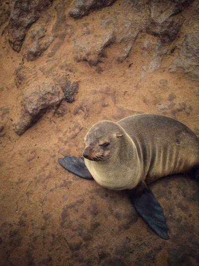 High angle view of seal at beach