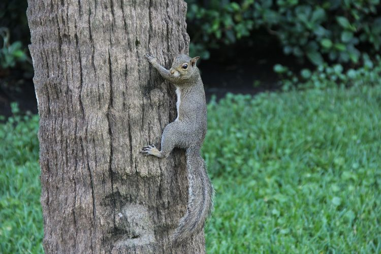 Animal Animal Themes Canon60d No People One Animal Outdoors Plant Squirrel