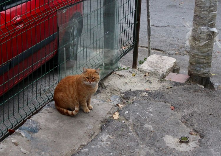Animal Themes Cat City City Life Domestic Animals Domestic Cat Feline Istanbul Istanbul Cats Istanbul Life No People One Animal Orange Cat Outdoors Pets Red Cat Stray Cat Street Street Animals