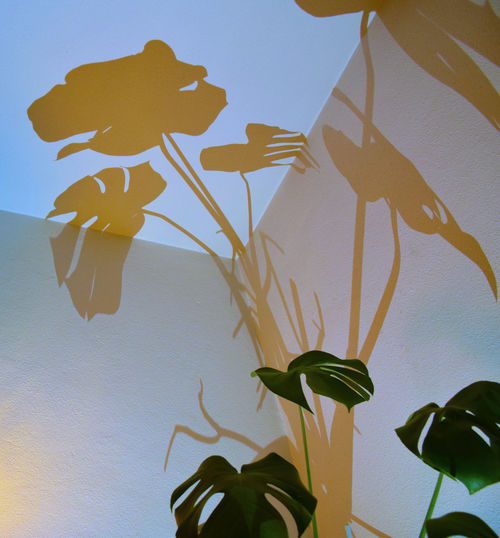 Plant Growth Leaf Close-up No People Wall - Building Feature Yellow Freshness Shadow Play Color Shadows Dramatic Lights Shadow Patterns