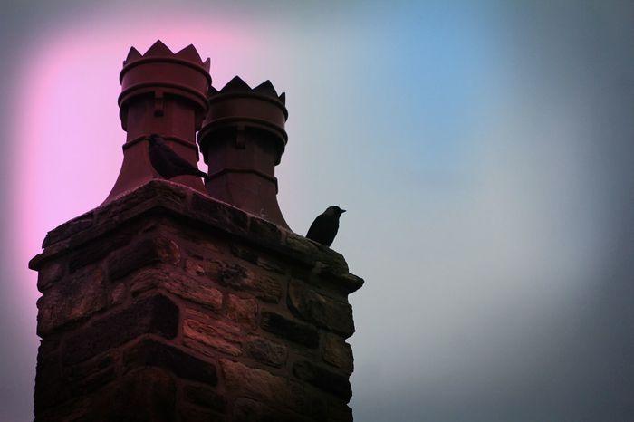 Blackbirds Chimney Pot Architecture Travel Destinations Tourism Cloud - Sky Sky No People Statue Outdoors Night