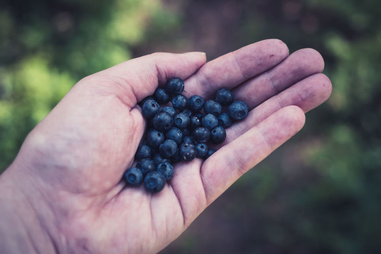 Cropped hand holding blueberries