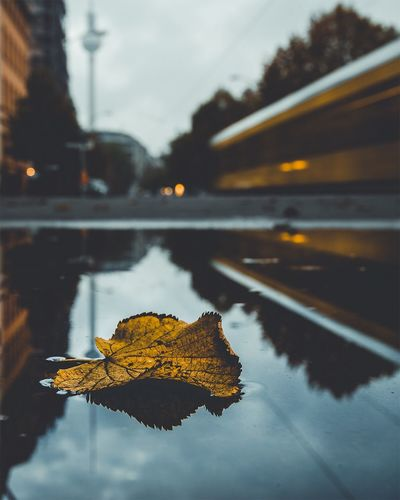 The Week Of Eyeem Reflection Leaf Autumn Water Nature Change Wet Outdoors No People Close-up Beauty In Nature Maple Leaf Sky Fragility Day Maple EyeEm Best Shots