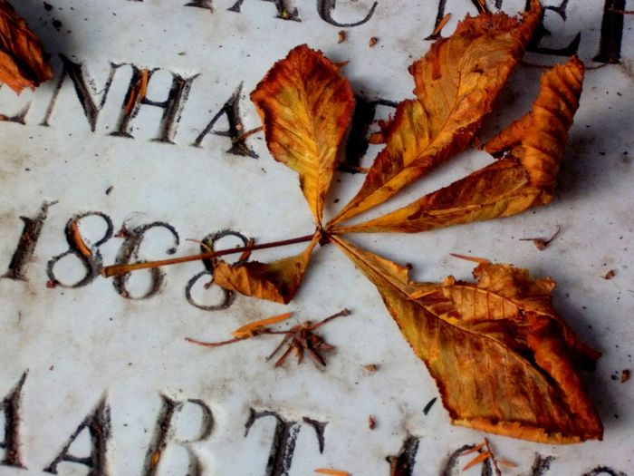 Textures And Surfaces Autumn Colors Cemeterybeauty