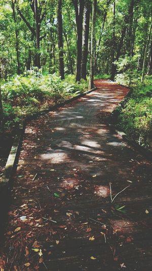 Learn & Shoot: Leading Lines Naturetrailtime Naturewalks Naturetrails EyeEm Nature Lover Naturelovers Beautiful Nature