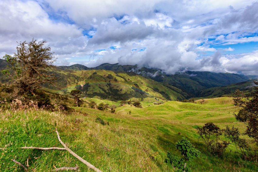 Dramatic view of grassland in the mountains outside of Salento, Colombia. Cloud Colombia Farm Hiking Palm Pasture Quindío Rural Tree Trip Andean Cauca Colombian  Countryside Forest Hike Jeep Landscape Mountain Nature Quindío Salento Tolima Trek Wax