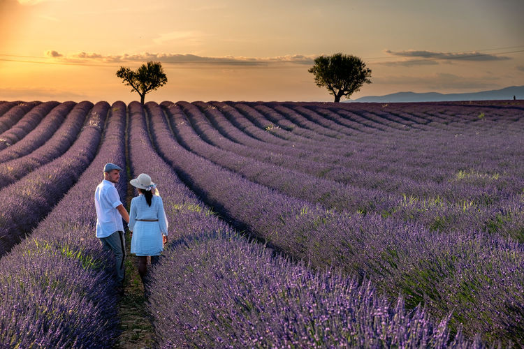 Scenic view of lavender amidst field against sky during sunset