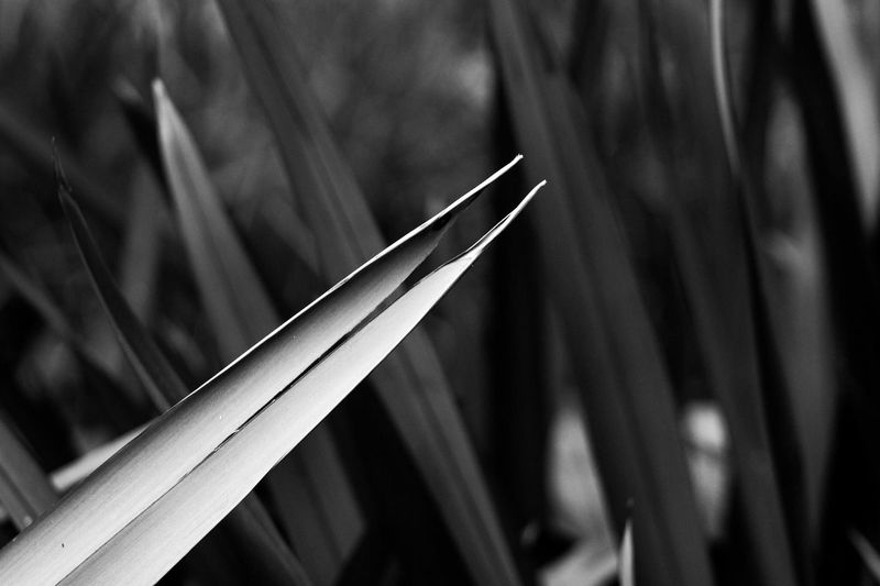 Filo Cut #light #Canon #argentina #summer #eyembestshot #Nature  Ig_argentina Cut EyeEm Best Shots Danger Canon Blackandwhite Photography Outodoors EyeEm EyeEm Nature Lover Blackandwhite Photography Blackandwhite Green Color Nature Focus On Foreground Close-up No People Indoors  Day Technology Nature