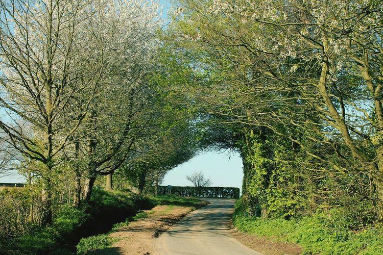 Essenhall Tree Tunnel Beautiful England Gorgeous Day