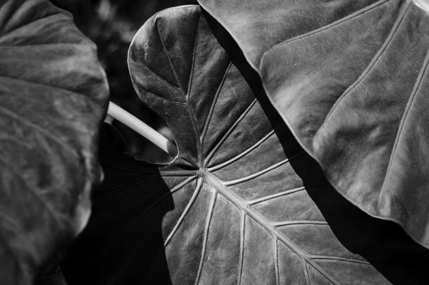 skeleton Close-up Day Focus On Foreground High Angle View Indoors  Leaf Leaf Vein Leaves Nature No People Pattern Plant Part Protection Textile