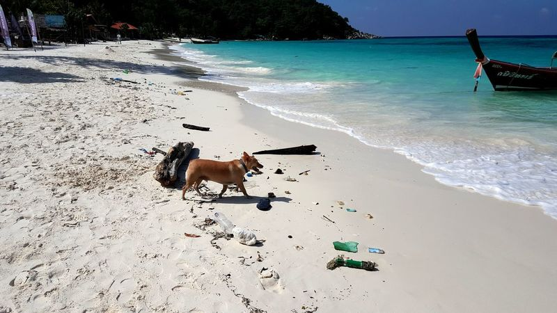 Dog Beach Pets Sand Domestic Animals Mammal Sea Animal Themes Nature Plastic Bottle Bin Trash Clean Messy Beach Dirty Beaches Dirty Driving Koh Lipe Thailand Horizon Over Water Scuba Diving Travel Destinations Swimming Wave