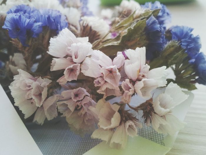Cute♡ Flowers