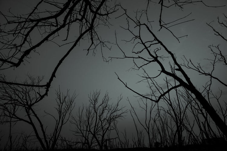 Low angle view of silhouette bare tree against sky at dusk