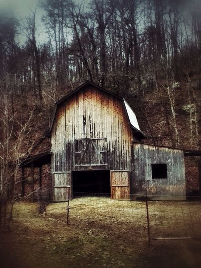 Into the woods--you have to grope, But that's the way you learn to cope. Into the woods to find there's hope Into The Woods Rurex RusticWays For The Love Of Barns